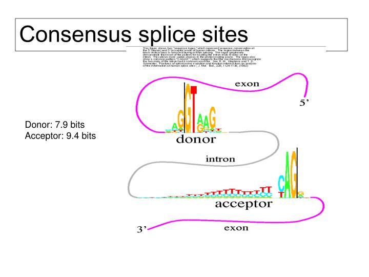 Consensus splice sites