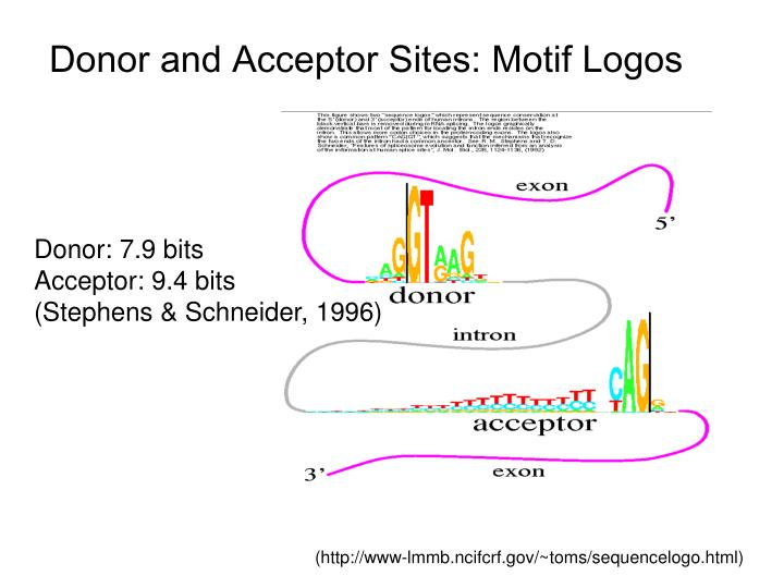 Donor and Acceptor Sites: Motif Logos