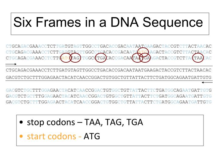 Six Frames in a DNA Sequence