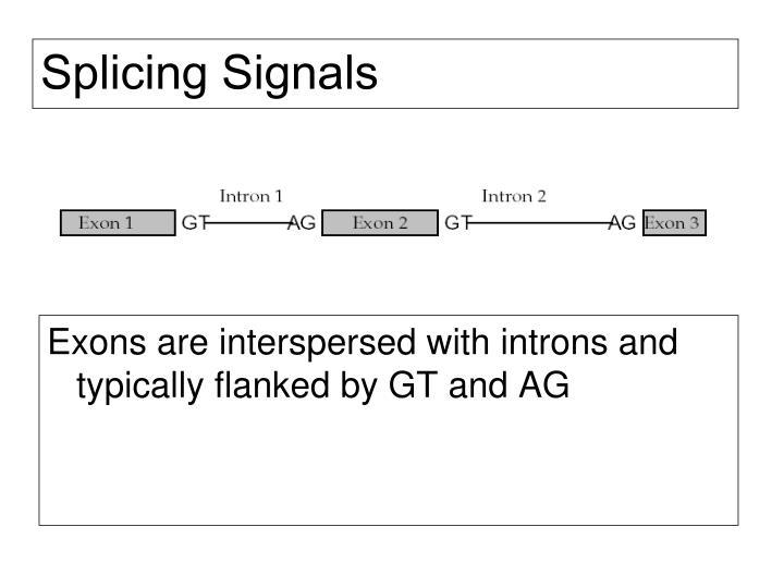 Splicing Signals