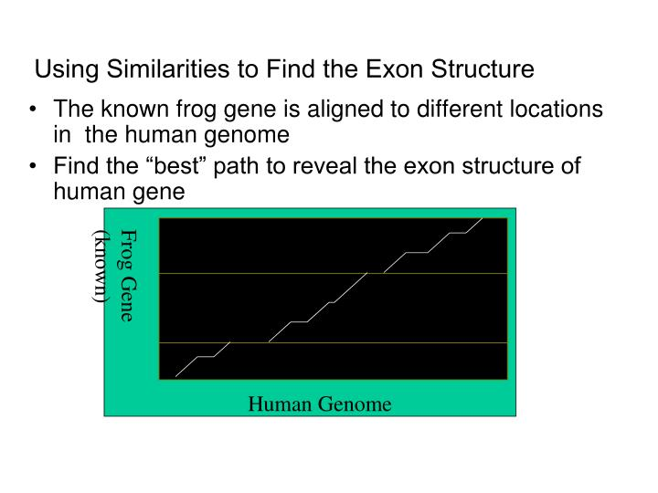Frog Gene (known)