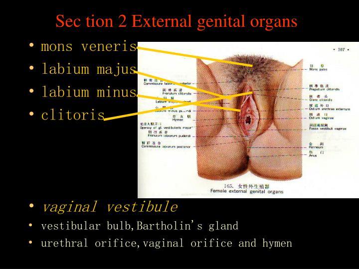 Sec tion 2 External genital organs