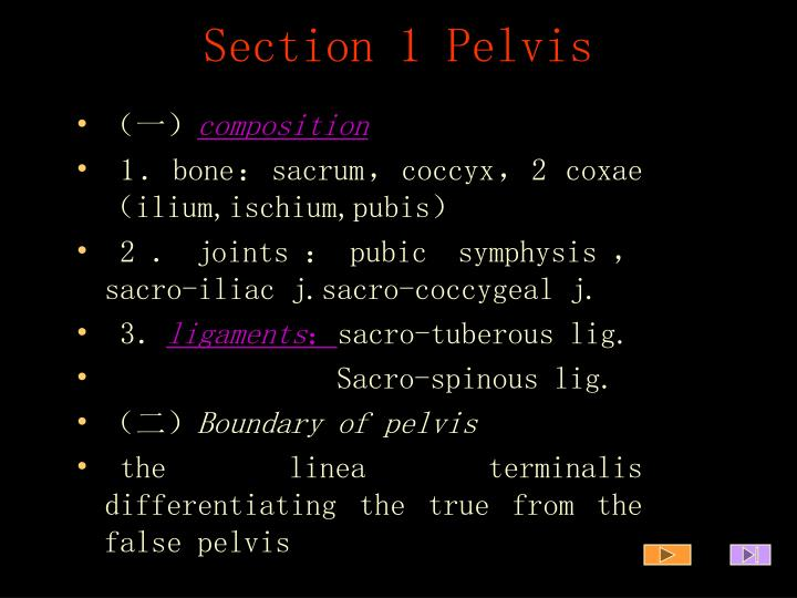 Section 1 pelvis