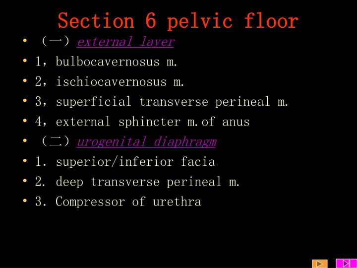 Section 6 pelvic floor