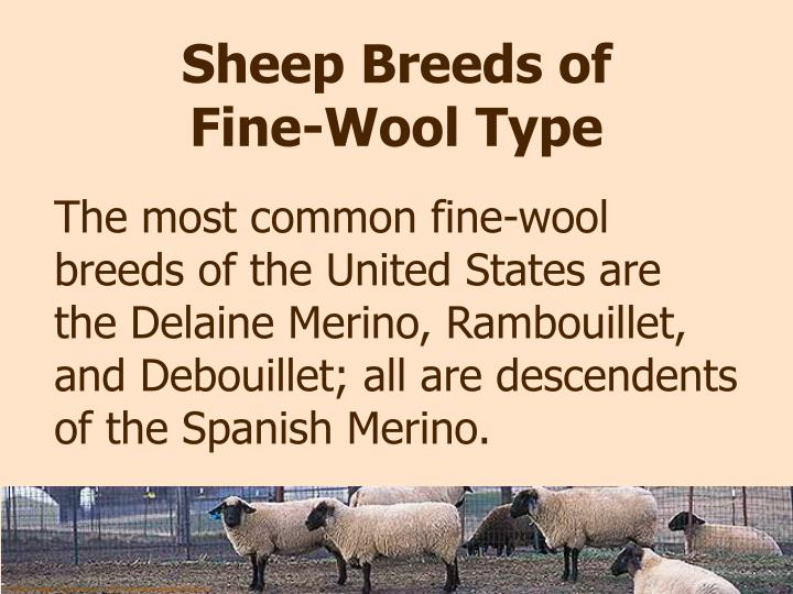 Sheep Breeds of Fine-Wool Type