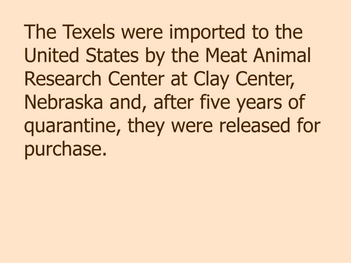 The Texels were imported to the United States by the Meat Animal Research Center at Clay Center, Nebraska and, after five years of quarantine, they were released for purchase.