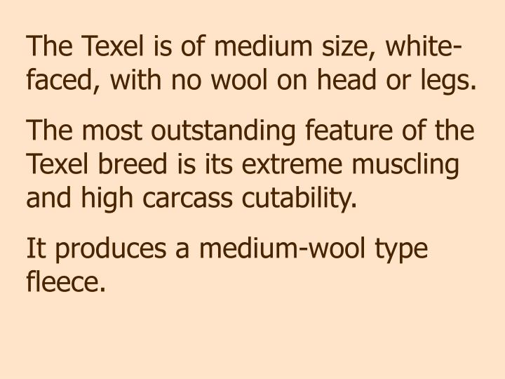 The Texel is of medium size, white-faced, with no wool on head or legs.