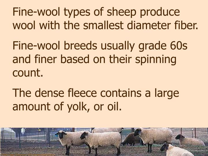 Fine-wool types of sheep produce wool with the smallest diameter fiber.