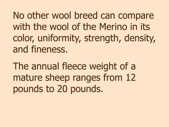 No other wool breed can compare with the wool of the Merino in its color, uniformity, strength, density, and fineness.