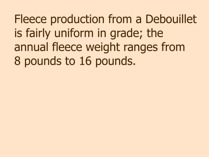 Fleece production from a Debouillet is fairly uniform in grade; the annual fleece weight ranges from   8 pounds to 16 pounds.