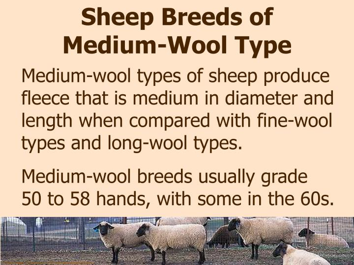 Sheep Breeds of Medium-Wool Type