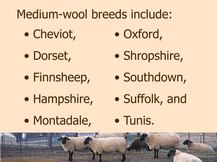 Medium-wool breeds include: