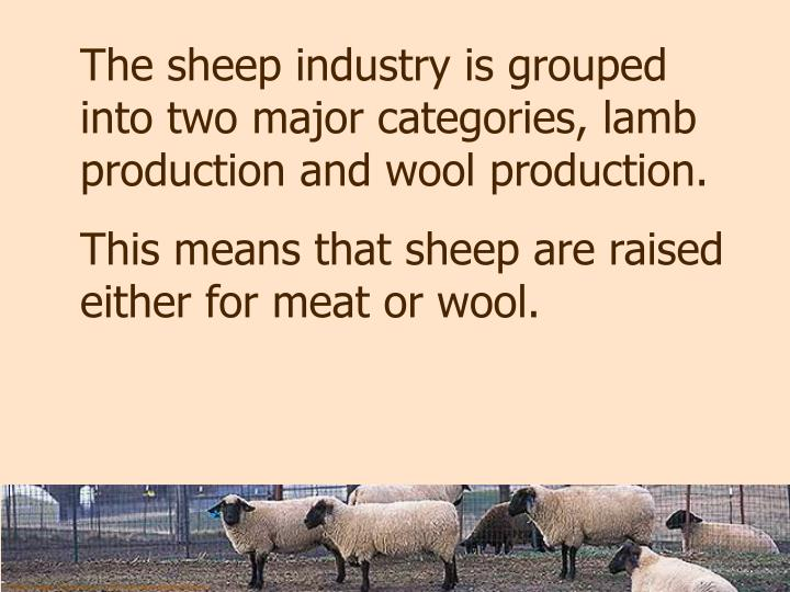 The sheep industry is grouped into two major categories, lamb production and wool production.