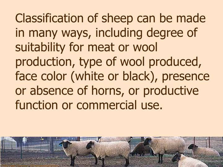Classification of sheep can be made in many ways, including degree of suitability for meat or wool production, type of wool produced, face color (white or black), presence or absence of horns, or productive function or commercial use.