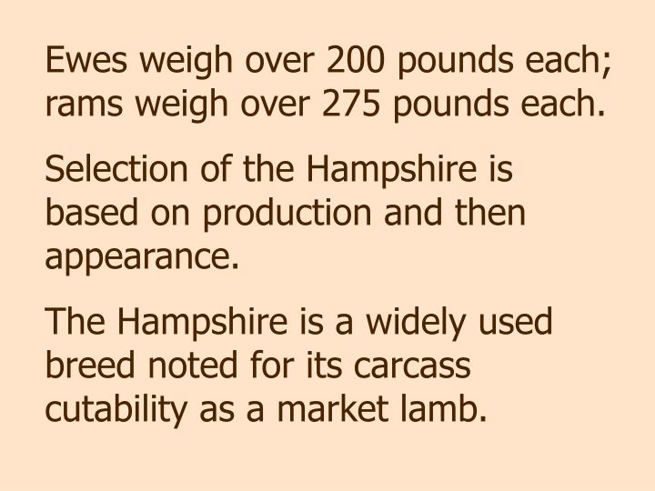 Ewes weigh over 200 pounds each; rams weigh over 275 pounds each.