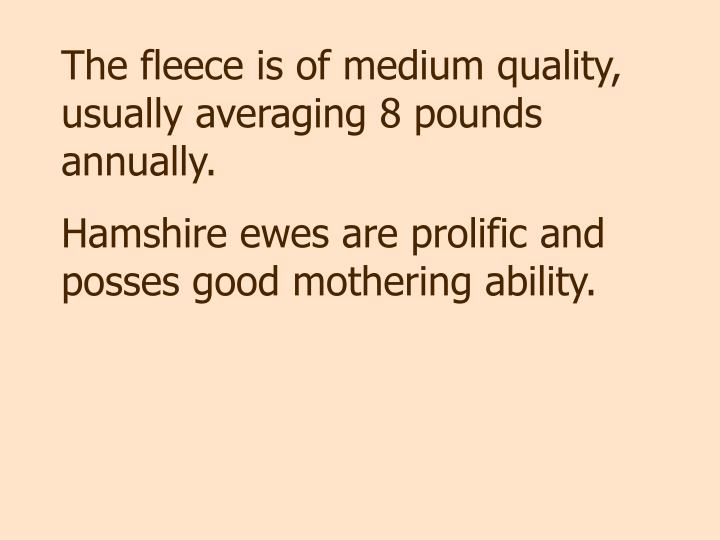 The fleece is of medium quality, usually averaging 8 pounds annually.