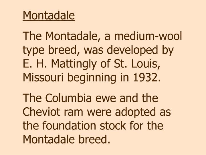 Montadale