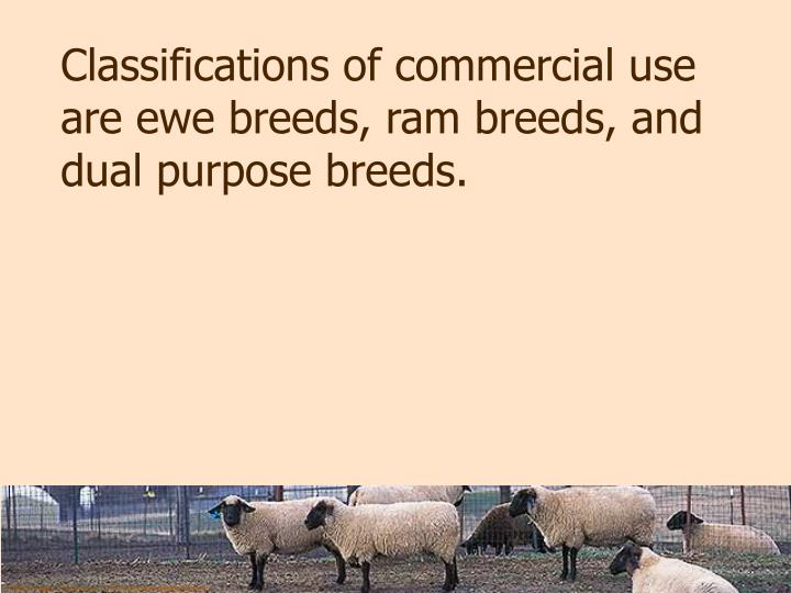 Classifications of commercial use are ewe breeds, ram breeds, and dual purpose breeds.