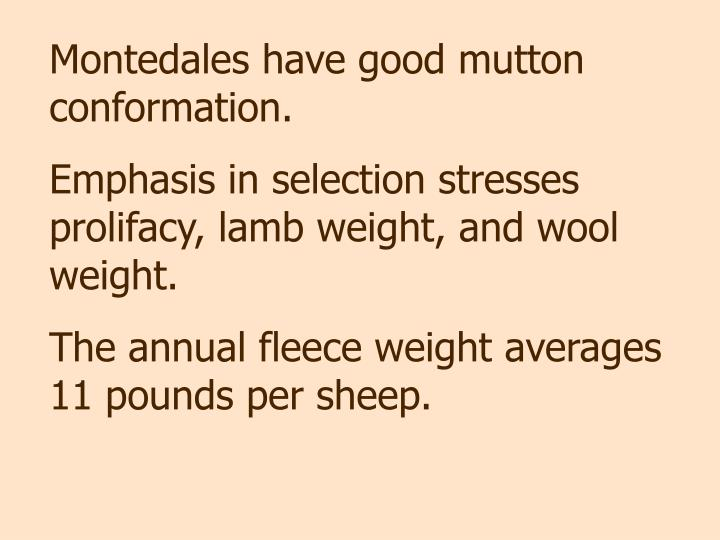 Montedales have good mutton conformation.