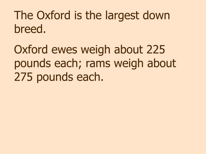 The Oxford is the largest down breed.