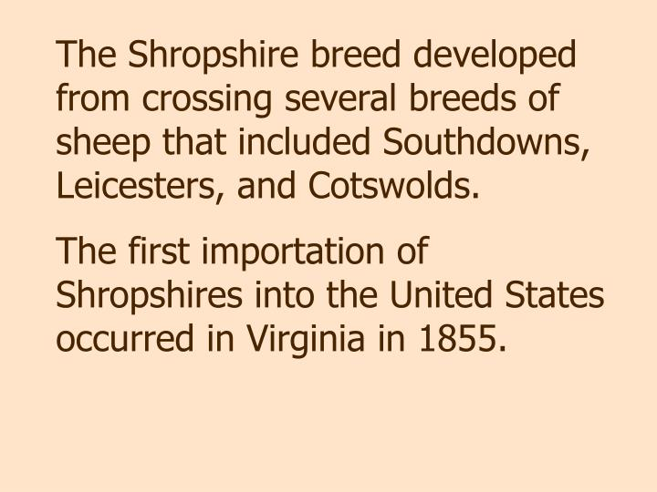 The Shropshire breed developed from crossing several breeds of sheep that included Southdowns, Leicesters, and Cotswolds.