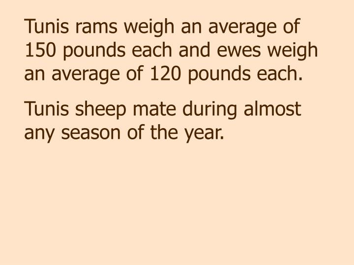 Tunis rams weigh an average of 150 pounds each and ewes weigh an average of 120 pounds each.