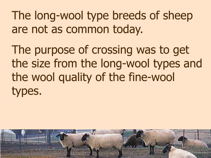 The long-wool type breeds of sheep are not as common today.