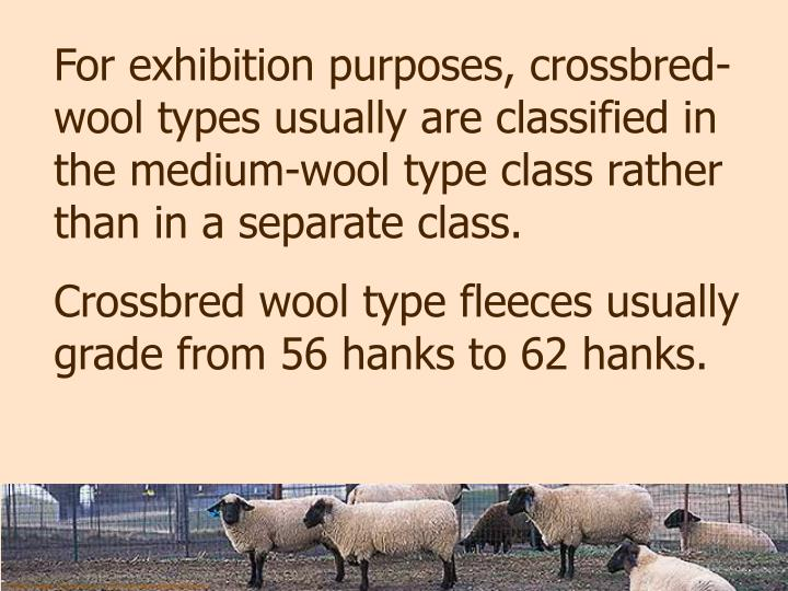 For exhibition purposes, crossbred-wool types usually are classified in the medium-wool type class rather than in a separate class.