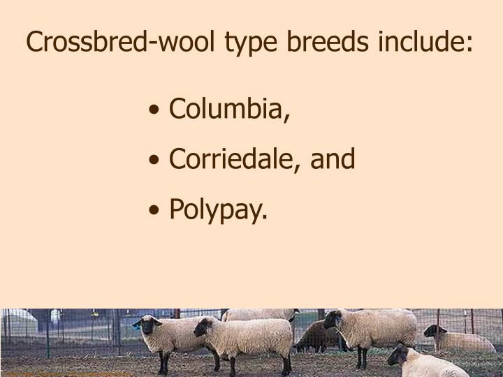 Crossbred-wool type breeds include: