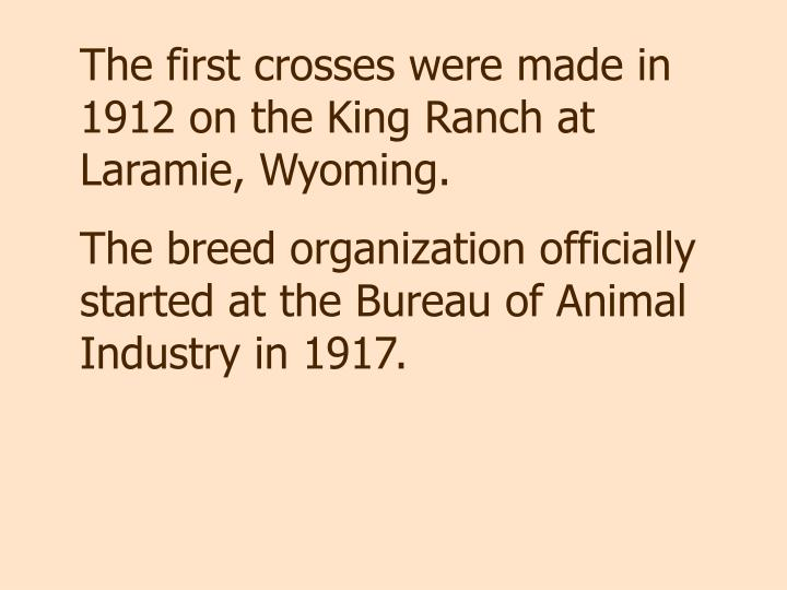 The first crosses were made in 1912 on the King Ranch at Laramie, Wyoming.