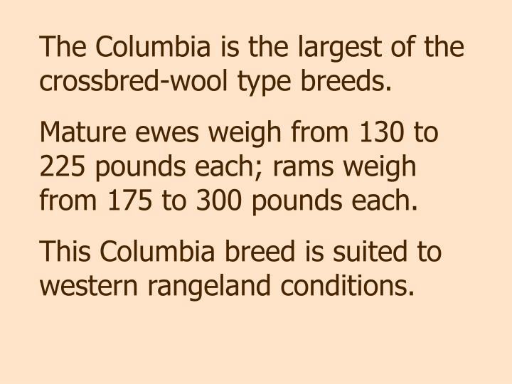 The Columbia is the largest of the crossbred-wool type breeds.
