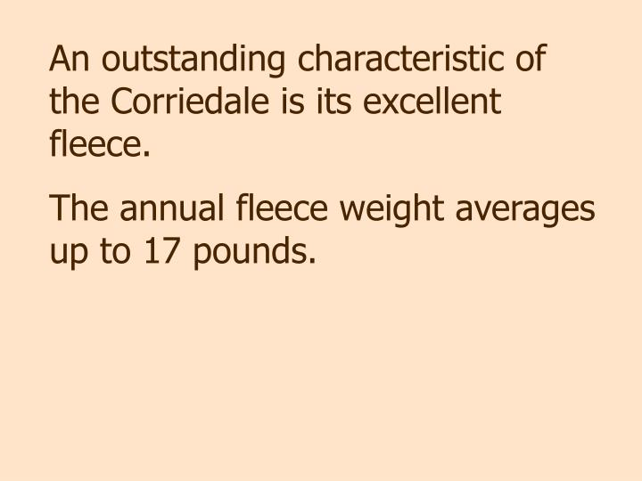 An outstanding characteristic of the Corriedale is its excellent fleece.