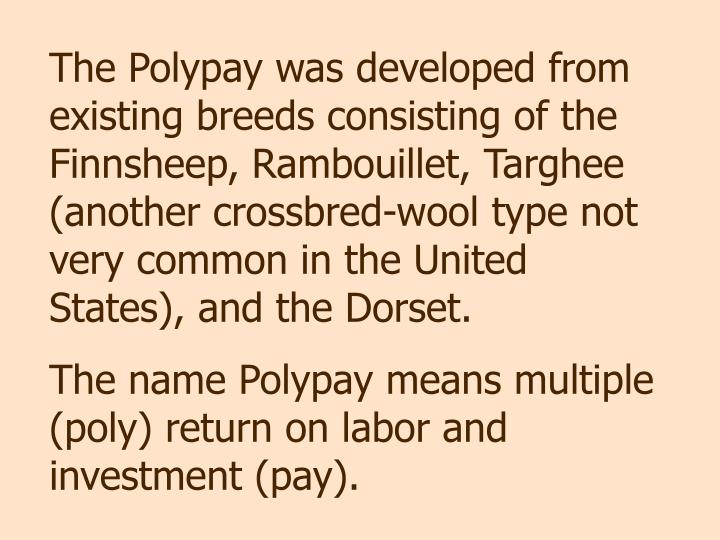 The Polypay was developed from existing breeds consisting of the Finnsheep, Rambouillet, Targhee (another crossbred-wool type not very common in the United States), and the Dorset.