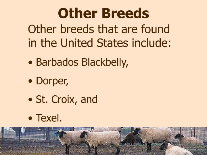 Other Breeds