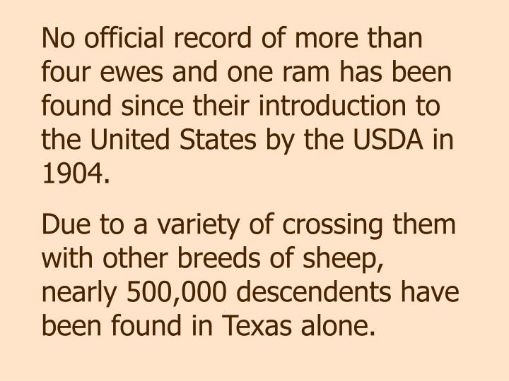 No official record of more than four ewes and one ram has been found since their introduction to the United States by the USDA in 1904.
