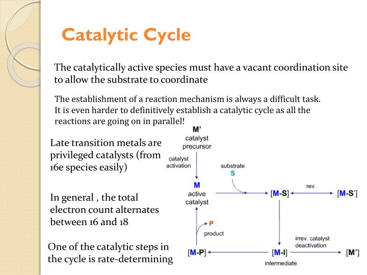 Catalytic Cycle