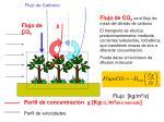 flujo de carbono