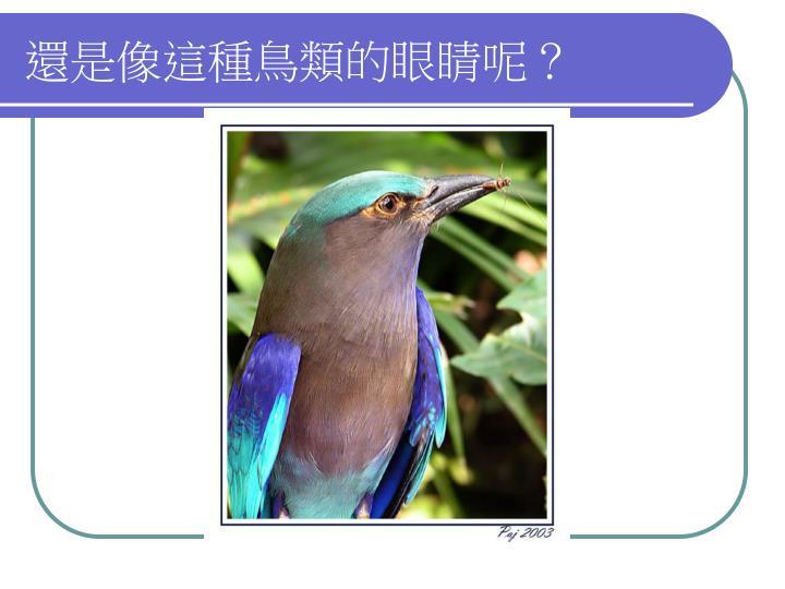 還是像這種鳥類的眼睛呢?