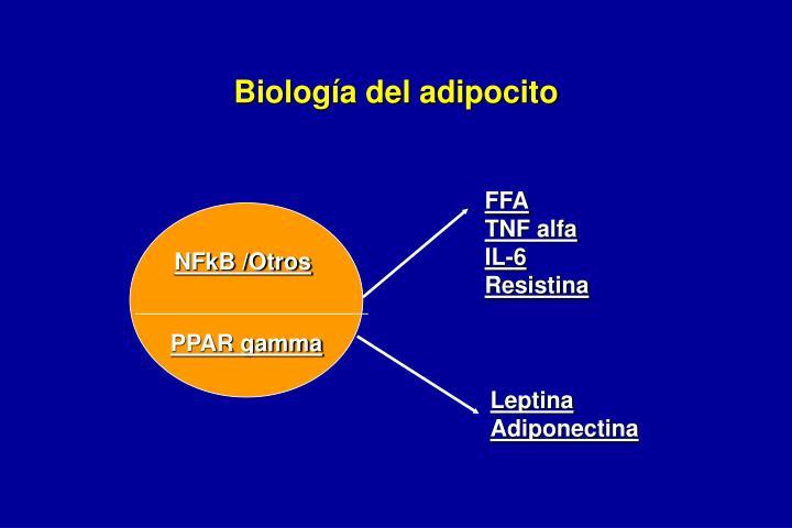 Biología del adipocito