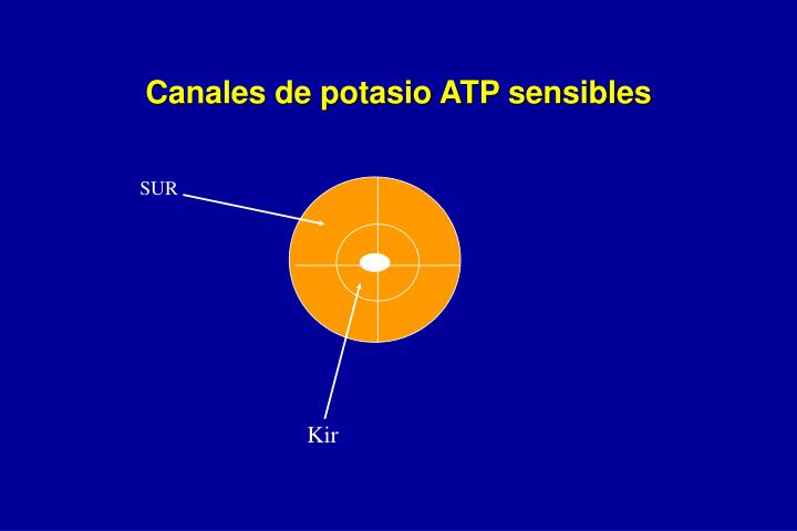 Canales de potasio ATP sensibles