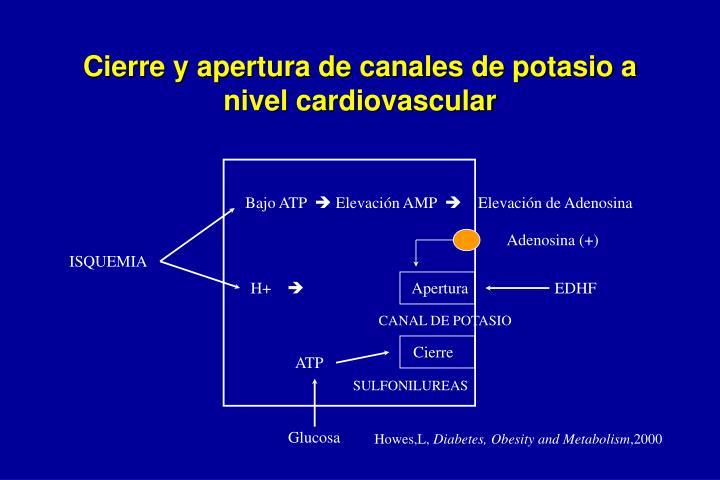 Cierre y apertura de canales de potasio a nivel cardiovascular