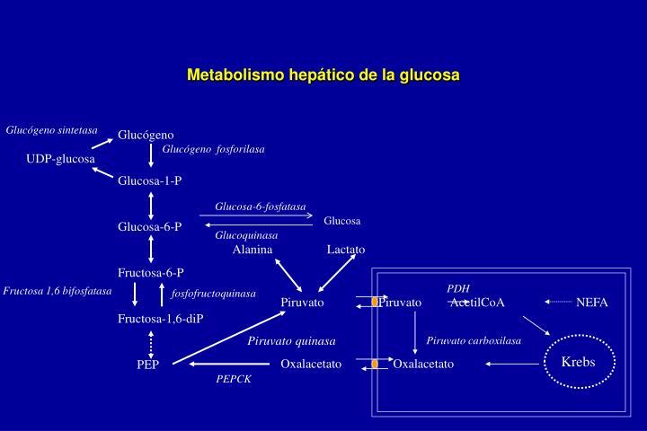 Metabolismo hepático de la glucosa