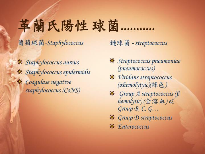 葡萄球菌-