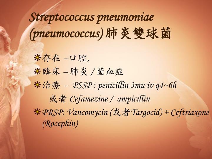 Streptococcus pneumoniae (pneumococcus)