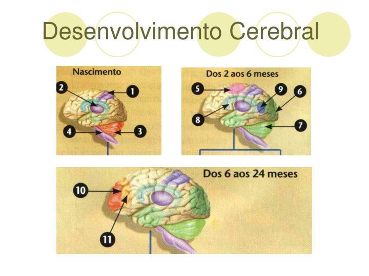 Desenvolvimento Cerebral