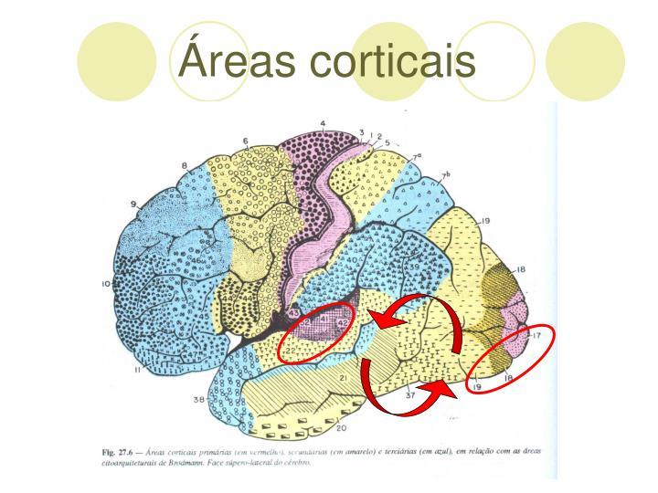 reas corticais
