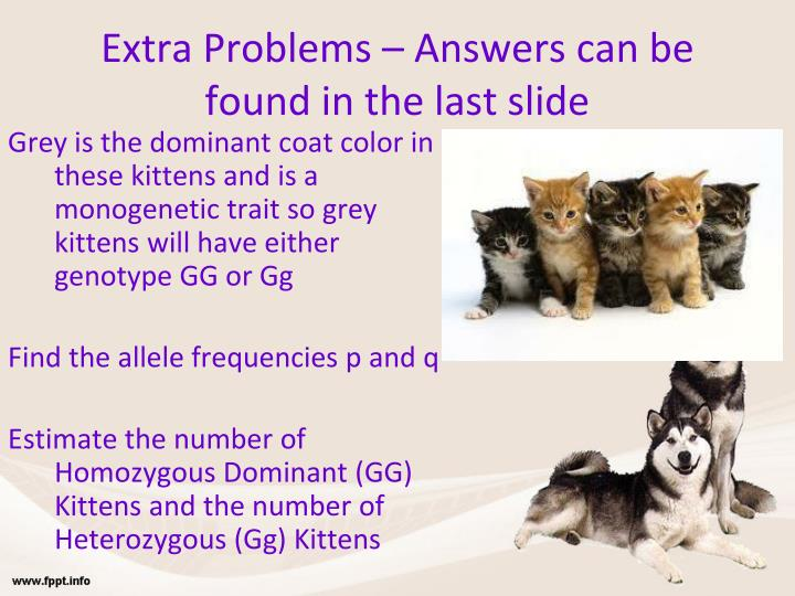 Extra Problems – Answers can be found in the last slide
