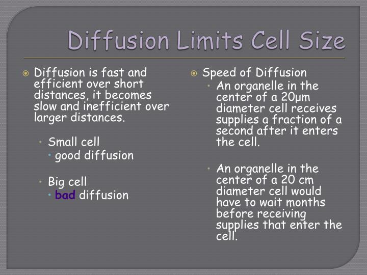Diffusion limits cell size