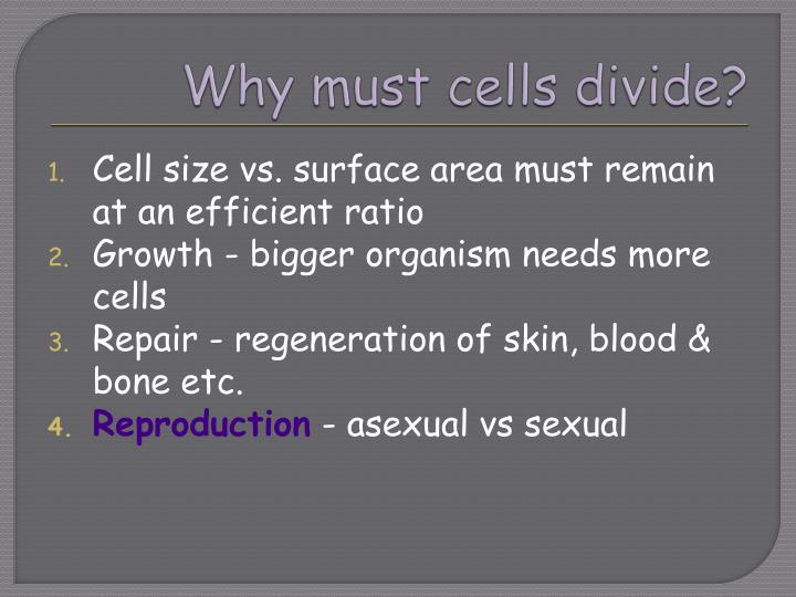 Why must cells divide?