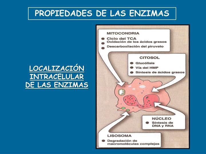 PROPIEDADES DE LAS ENZIMAS